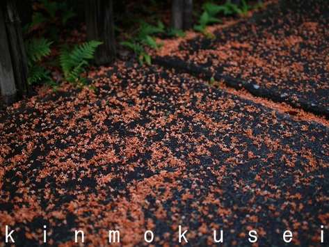 20101010_kinmokusei_p1440186
