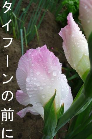 20140710_l1580611_2