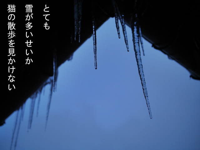 20110123p1520577_2